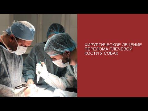 Хирургическое лечение перелома плечевой кости у собак
