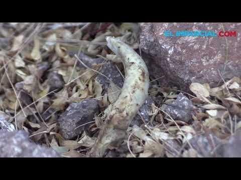 Guerreras Buscadoras hallan tres cuerpos en Guaymas y Empalme