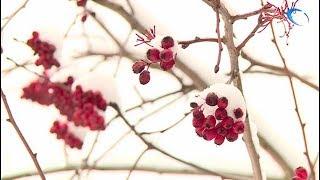 Великий Новгород накрыл первый снегопад