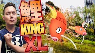 ポケモンGO!巣巡り調査隊!大物コイキングを探し出せ!PokemonGO