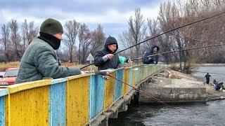 Календарь рыболова северский донец