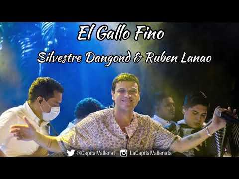 El Gallo Fino - En Vivo Silvestre Dangond Y Ruben...