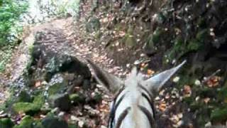 preview picture of video 'Molokai Mule Ride_0001.wmv'