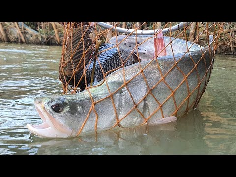 Download Unique Underwater Fishing | Best Fish Catching | Best Fishing Video HD Mp4 3GP Video and MP3