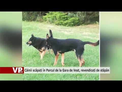 Câinii scăpați în Parcul de la Gara de Vest, revendicați de stăpân