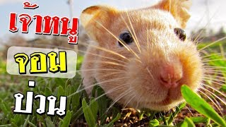 สัตว์โง่ๆ ตัวเล็กๆจอมซ่า - dooclip.me