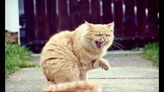 猫パンチ特集だニャ!