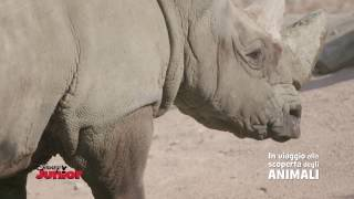Disney Junior In Viaggio Alla Scoperta degli Animali - Rinoceronti