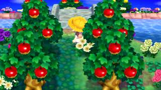 It's been 12 months?? - Animal Crossing: New Leaf