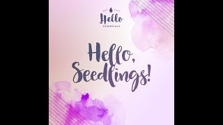 Hello Seedlings!