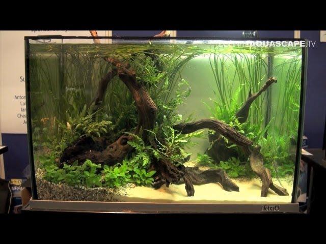 Aquascaping - Aquarium Ideas from Aquatics Live 2012, part 4