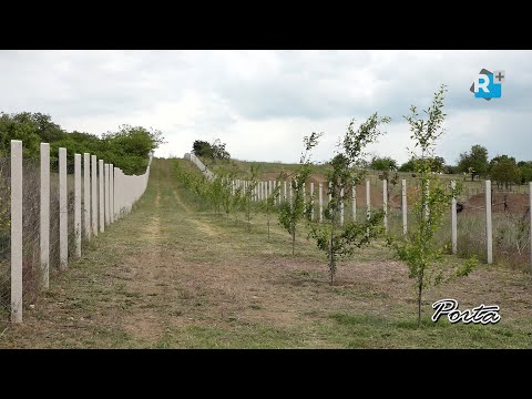 Önkormányzati szilváskert, rekultivált területek és megújult külterületi utak Kistarcsán