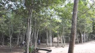 Cobá Ruinas Mayas - Mexico  Mayan Ruins