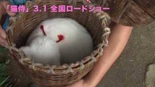 玉之丞さまの猫萌え動画10―映画「猫侍」メイキング