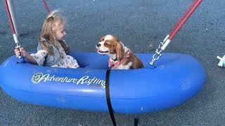 Cavalier King Charles Spaniel Puppies Videos