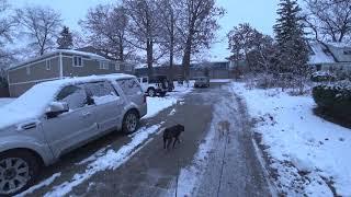 С собаками по первому снегу