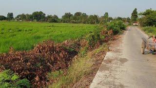 #ขายที่ดินราคาถูกมาก 10 ไร่ 1 งาน ยกแปลง 2.3 ล้าน หน้ากว้างติดถนน 300 เมตร ที่ลพบุรี 0983875209