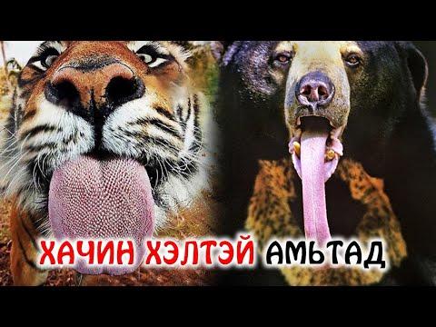Хамгийн аюултай, хачин хэлтэй амьтад 👅
