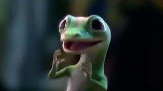 "The ""Geico"" Gecko Complination"
