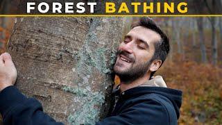 I Tried Forest Bathing - The Japanese Longevity Secret