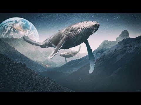 Мияаги эндшпиль Синий кит