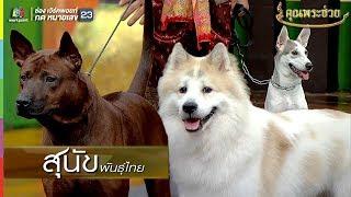 น่ารักมากกกกก!! น้องหมาไทย 3 สายพันธ์ุ | คุณพระช่วย
