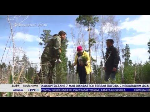 От семечка до дерева: как в Башкирии проходит лесовосстановление