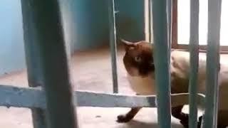 Очень ржачный кот.  Смотреть всем