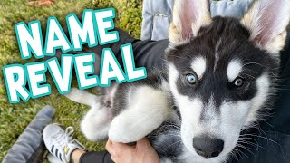 We Picked our Puppies New Name!