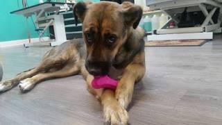 AUDIOS PARA PERROS Y GATOS | sonidos para perros y gatos.