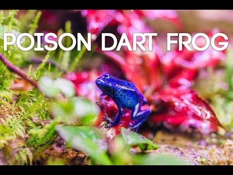 Poison Dart Frog Terrarium
