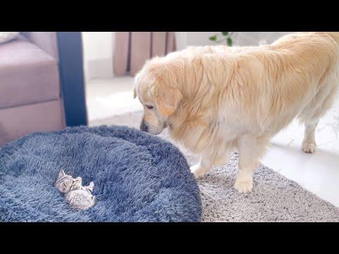 Saia  daí, gatinho! Essa cama é minha!