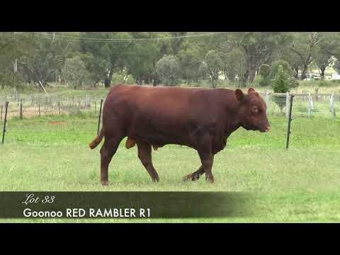 GOONOO RED RAMBLER (AMF) (MAF) (NHF) (OSF) GSJR1