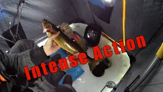 Walleye Ice Fishing Jan 12