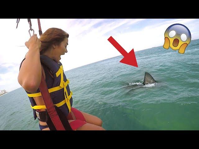 SHARK ATTACK PRANK (WIFE FREAKOUT)