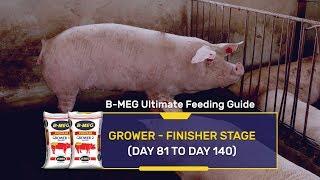 Tuluy-tuloy ang kita sa B-MEG PREMIUM Hog Grower 1 & Grower 2!