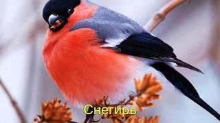 Птицы нашей Родины. Видео для развития детей дошкольного возраста