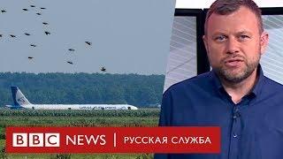 Откуда взялись чайки, которые сбили самолет в Жуковском? | ТВ-Новости