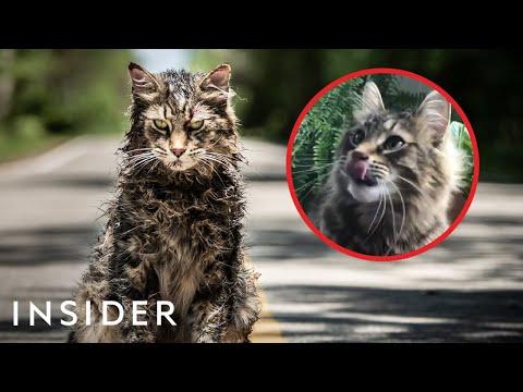 Como se entrenan gatos para la TV y para hacer películas (inglés)