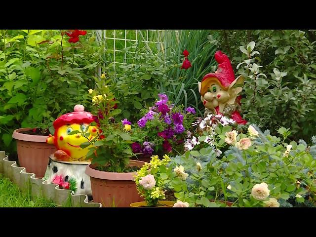 Не садоводство, а настоящий заповедник