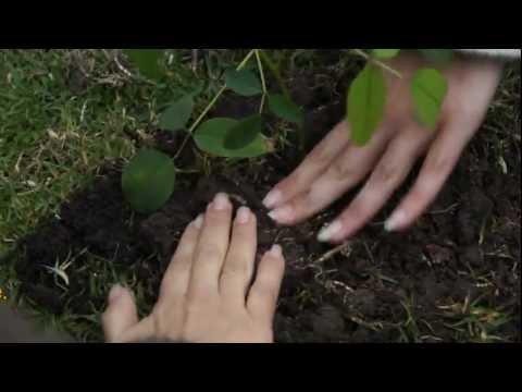 ReciclARTE Día Mundial del Medio Ambiente
