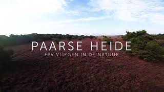 Flowering heather. Flying FPV in nature