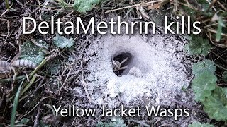 How to get rid of, kill in-ground yellow jacket wasps for good using Delta Dust ANGRY WASPS
