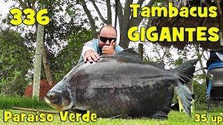 Programa Fishingtur na Tv 336 - Clube de Pesca Paraíso Verde