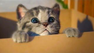 МОЙ Маленький КОТЕНОК Виртуальный питомец Как мультик видео для детей СИМУЛЯТОР котика Ми Ми Ми #ММ