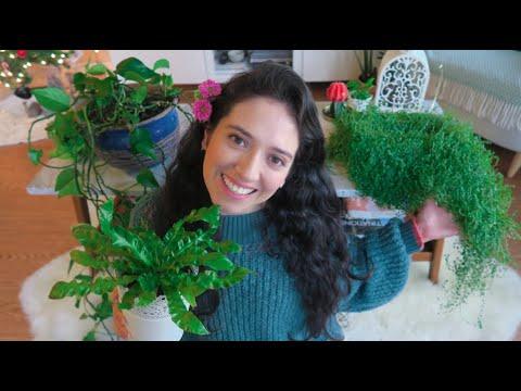 5 Plantas de interior resistentes