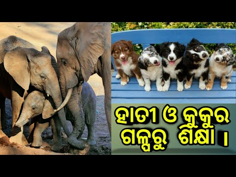 Learn From (Story of Elephant and Dog ) || Best Odia Motivational Video For Students ||