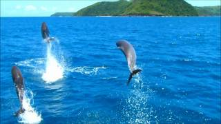 Dolphins jumping in fiji