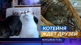 Новгородская «Котейня» ждёт в гости любителей хвостатых