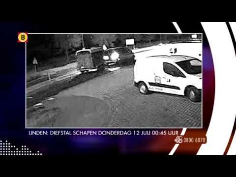 Bureau Brabant - Diefstal schapen Linden